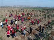 植树造林 绿化家园