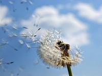 等候一朵梦中的花开